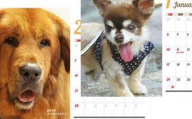 ●アニプロ2022ラッキーわんこ卓上カレンダー(卓上A6サイズ)
