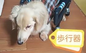 【介護を必要とする犬の4輪歩行器】感謝のお手紙・活動報告レポート・4輪歩行器2台分の購入チケット