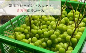 5万円応援シャインマスカット(2房)