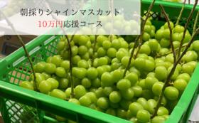 10万円応援シャインマスカット(2房)