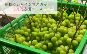 3万円応援シャインマスカット(2房)