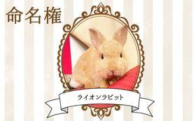 【ウサギ命名権A】命名者さま限定!入場料無料パスポート