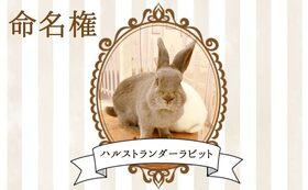 【ウサギ命名権B】命名者さま限定!入場料無料パスポート