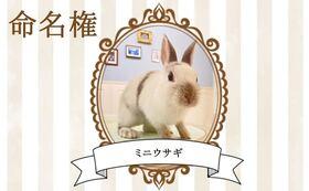 【ウサギ命名権C】命名者さま限定!入場料無料パスポート