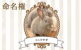 【ウサギ命名権D】命名者さま限定!入場料無料パスポート