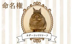 【ウサギ命名権E】命名者さま限定!入場料無料パスポート