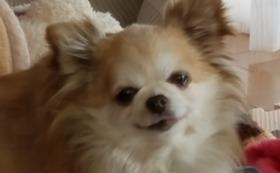 保護犬 ララ コース