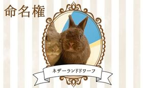 【ウサギ命名権F】命名者さま限定!入場料無料パスポート