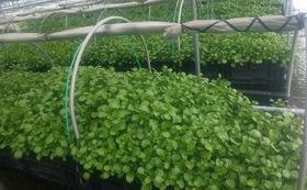 農園オーナーシップー自分の畑を創る+農園野菜、ハーブテイー豪華詰め合わせセット10回分+活動報告