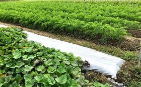 石川県立大学内で生産した農作物(大)