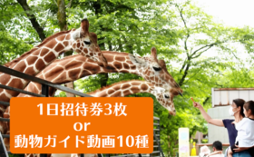 1日招待券3枚 or 動物ガイド動画データ10種コース
