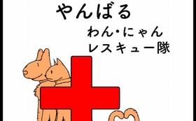 沖縄やんばるのわんにゃんレスキュー活動報告