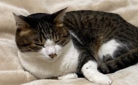 【リターン不要の方向け】犬猫見守り隊(画像とイラスト)50000円支援