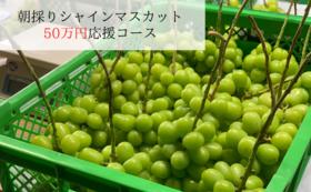 50万円応援シャインマスカット(2房×3箱)