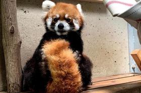 動物たちの画像&森きらら公式サイトにお名前掲載コース