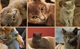 感謝の手紙&ポストカード2枚&猫キーホルダー&猫マグネット
