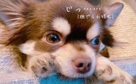 動物たちの居場所を守る!!!!!