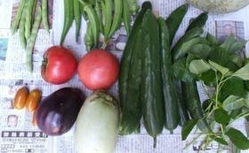 15年目を記念する棚田の書籍と感謝を込めた旬の野菜セット