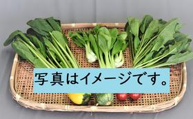 【福井市外の方向け】地元農家さんこだわり新鮮野菜の詰合せ