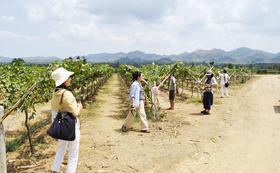 【タイ国内取材体験に加え、タイワインも満喫できるお得なプラン!なかなか味わえないプロジェクトの裏側&タイの魅力へご案内!】