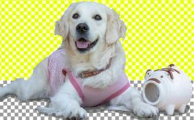 【年間の盲導犬とユーザーへのフォローアップ費用約70名分】ご支援コース