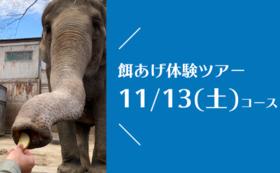 【11/13(土)開催!】宮子に餌あげ体験ツアー(昼食付き)&園にご招待コース