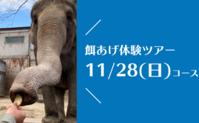 【11/28(日)開催!】宮子に餌あげ体験ツアー(昼食付き)&園にご招待コース