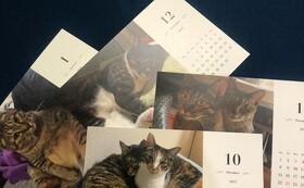 お好きな写真で作成できる12カ月卓上カレンダー