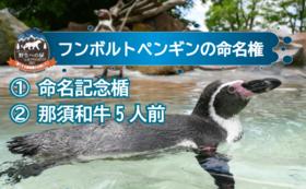 命名して応援|フンボルトペンギン