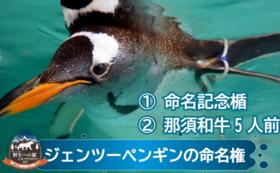 命名して応援|ジェンツーペンギン