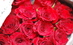 バラをお送りします (20本)