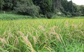 【農薬無散布】千葉県産ふさこがね 玄米 30 kg (送料込み)