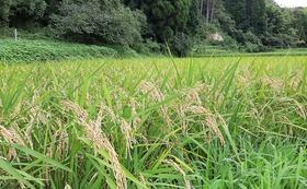 【農薬無散布】千葉県産ふさこがね 白米 10 kg (送料込み)