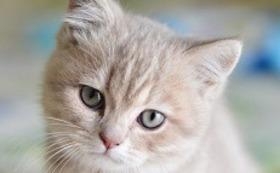 ⑨メス猫1匹の避妊手術費用代【30,000円】