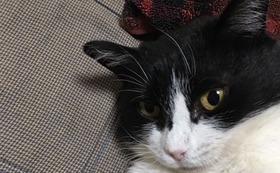 ⑦オス猫1匹の去勢手術代【20,000円】