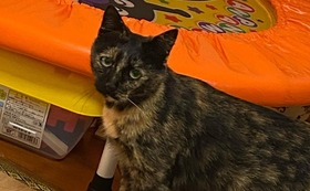 ④猫1匹分のワクチン5種の医療費です【7,000円】