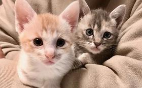 あたたかいご支援ありがとうございます♡猫ちゃんたちの幸せのために