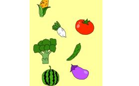 季節の野菜(2回 夏 冬)