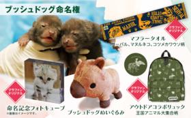 【9/17 NEW】動物命名権コース|ブッシュドッグ