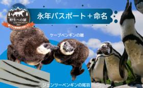 【10/4 NEW】永年パスポートと命名で応援|ケープペンギン