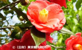 一号基地・伊豆大島 特産品セット