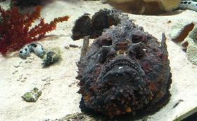 【限定5名】水族館の生き物に名前をつけられる!