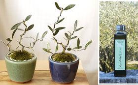 湘南二宮オリーブオイルとオリーブの盆栽