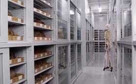 通常は非公開の科博標本庫で人骨から祖先たちのことを知るツアー