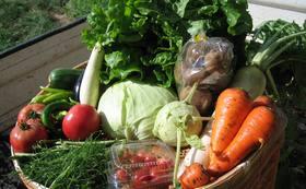 有機栽培の野菜セットをお届けいたします!