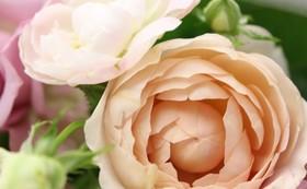 自分用や大切なあの人用に送っても◎!季節の花を使ったミニブーケを毎月お届け(12回)