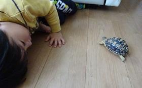 【限定1】子ども達に大人気のリクガメの名づけ親になってください!