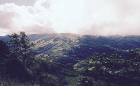 コスタリカのコーヒー農家の方の様子を写真でお届け!