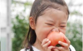 鈴木農園まるごとセット【大】
