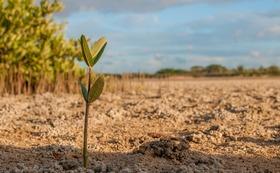 あなたの3,000円支援で、3マングローブが植えられます。